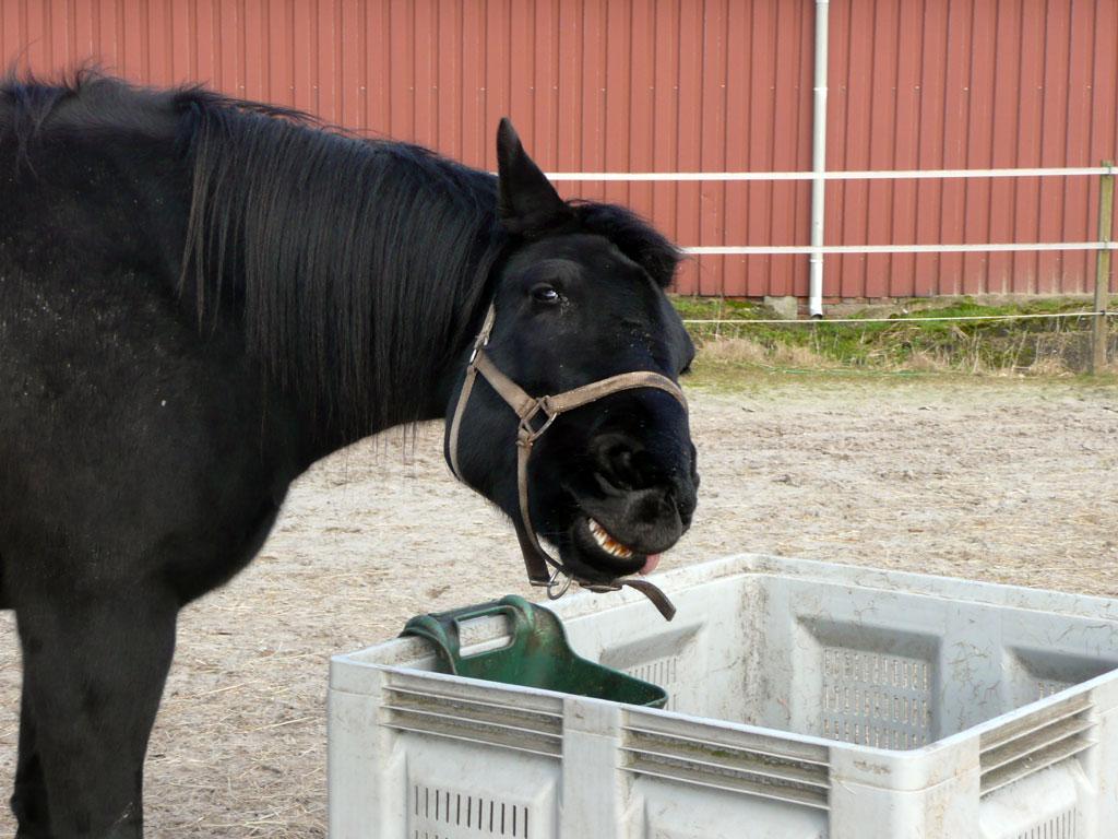 Opleiding tot paardencoach